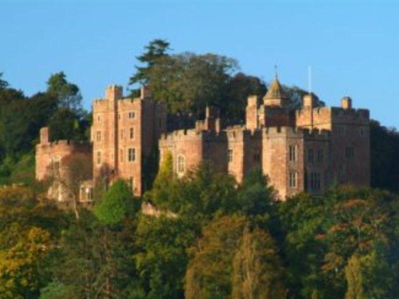 Dunster Castles Trees