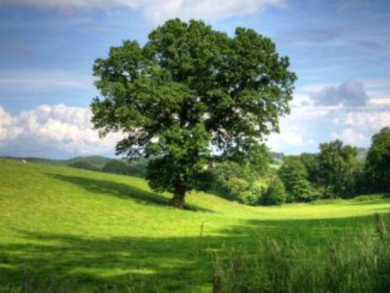 clouds-countryside-farmland-53435-737x500